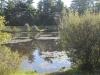 pond-2_0